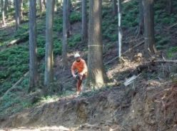 原材料の木
