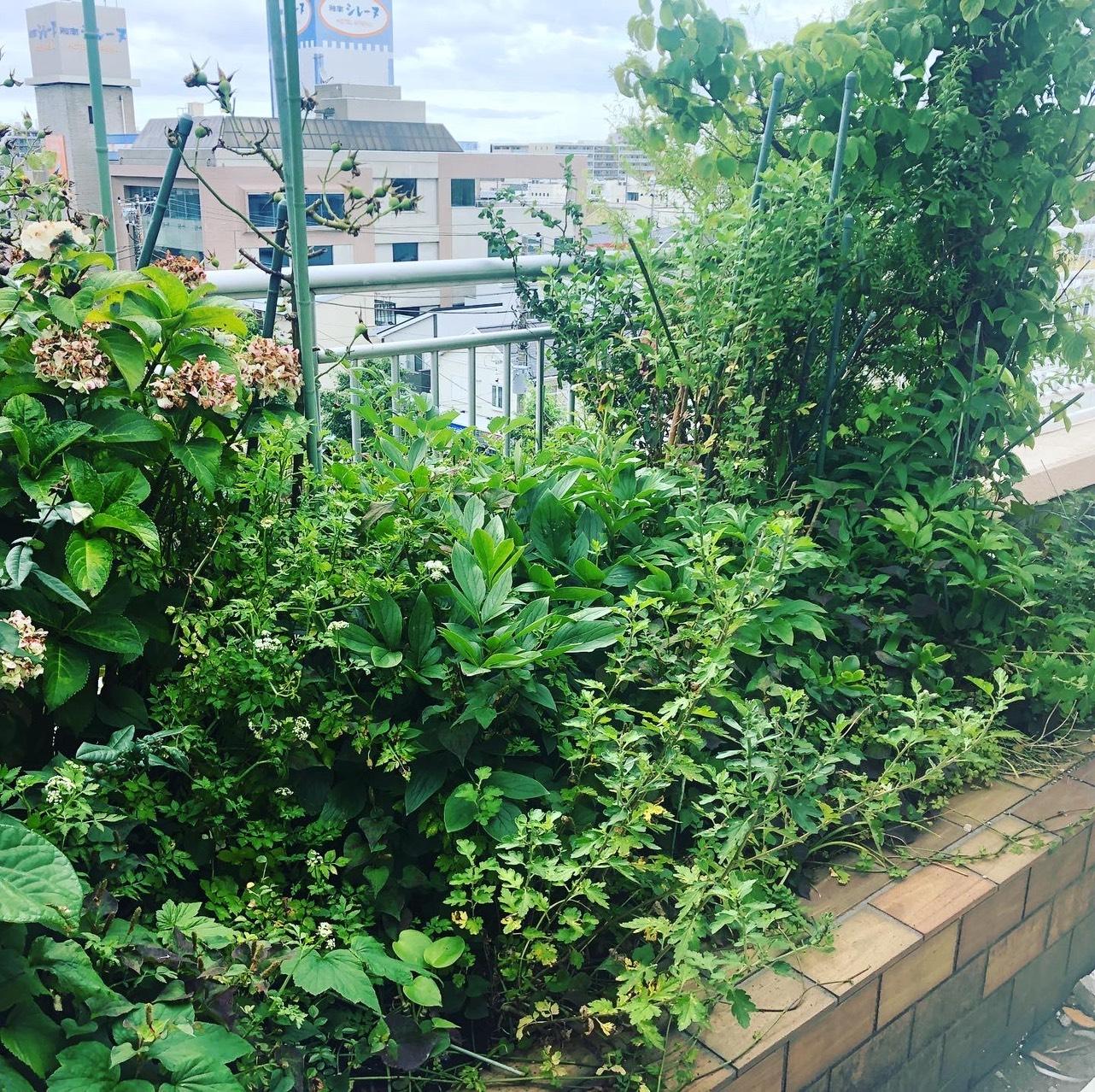 植栽デザイン|花壇の植え替え工事02